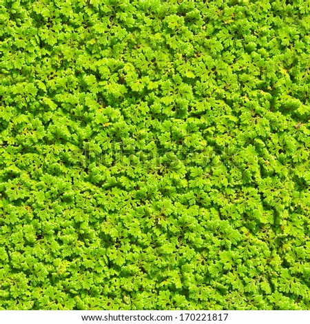 Green background of ground plants - stock photo
