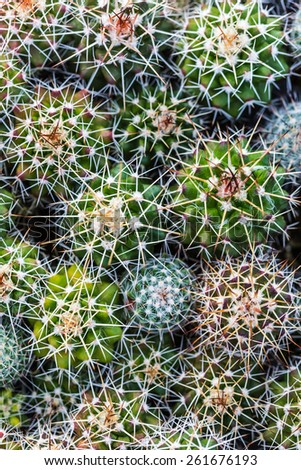 green background of the spines a cactus closeup - stock photo