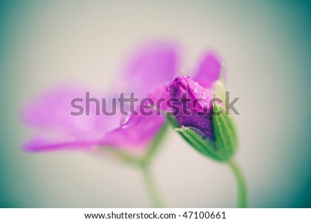 Green background with blossom flower - stock photo