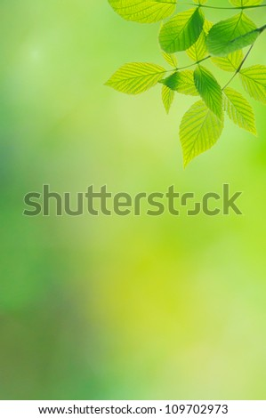 Green background with leaves of raspberry-bush - stock photo