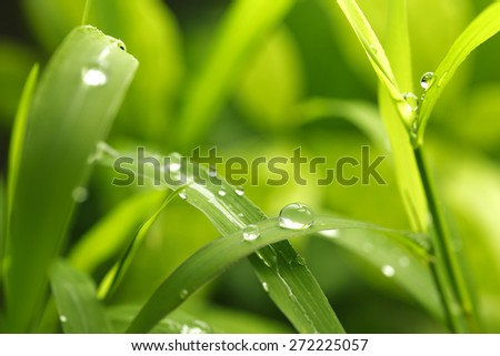 green background with rain droplets,shot with very shallow depth of field  - stock photo