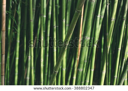 Green bamboo - background - stock photo