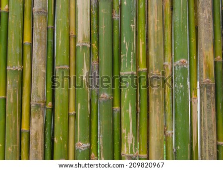green bamboo fence background texture pattern. - stock photo