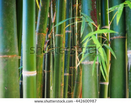 Green bamboo forest - stock photo
