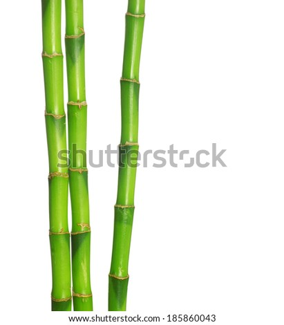 green bamboo isolated on a white background - stock photo