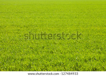 Green bamboo leaf - stock photo