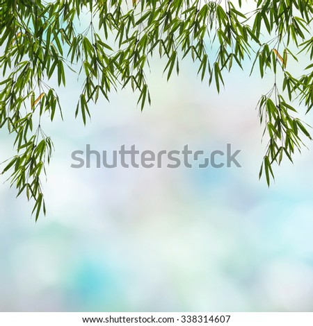 Green Bamboo leaf abstract background. - stock photo