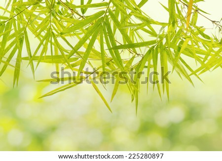 Green Bamboo leaf background  - stock photo