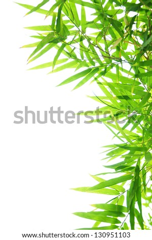 Green Bamboo leaf background - border design - stock photo
