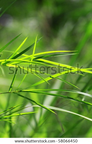 Green bamboo leaf in forest - stock photo