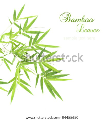 Green bamboo leaves isolated on white background with sample text for design - stock photo