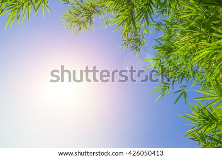 Green bamboo leaves or bokeh background .Green Energy. - stock photo