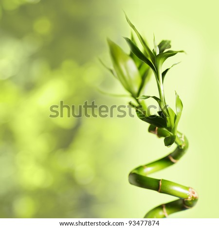 Green bamboo over background, spa concept - stock photo