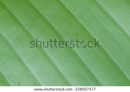 Green banana leaf background texture in pattern - stock photo
