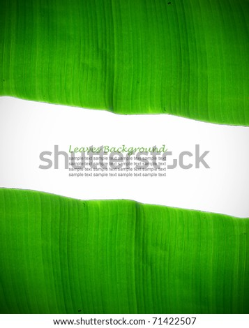 Green Banana Leaf  with copyspace - stock photo