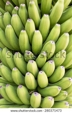 Green bananas can be used as food background - stock photo