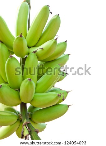 Green bananas on a tree isolated on white - stock photo
