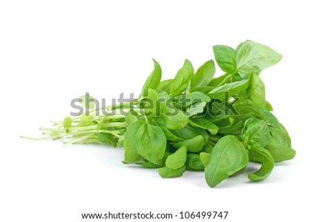 Green basil  isolated on the white background - stock photo