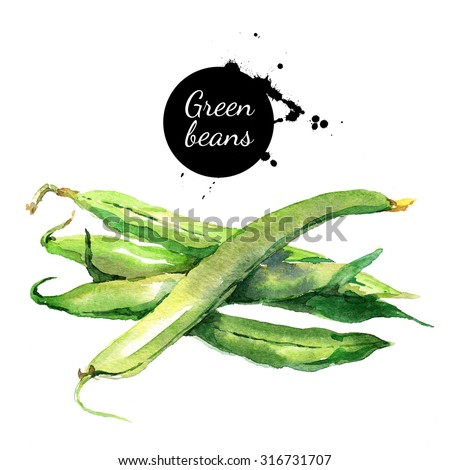 Green beans. Hand drawn watercolor painting vegetable on white background - stock photo