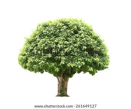 Green beautiful and big tree - stock photo