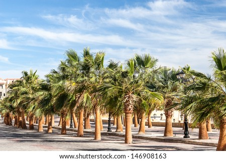 Green beautiful palms tree at blue sky - stock photo