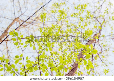 Green beech tree in a forest at spring - stock photo