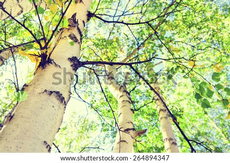 Green birch in spring forest. Small depth of field. Vintage filter - stock photo