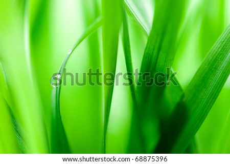 Green blades with drop of water - stock photo