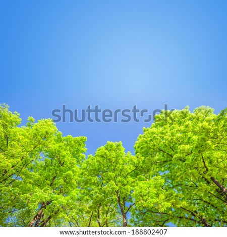 Green branches in a wood and blue sky - stock photo