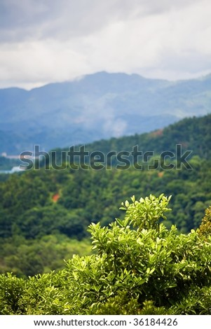 Green branches with jungle and mountains in the background. Focus on the green branches. - stock photo