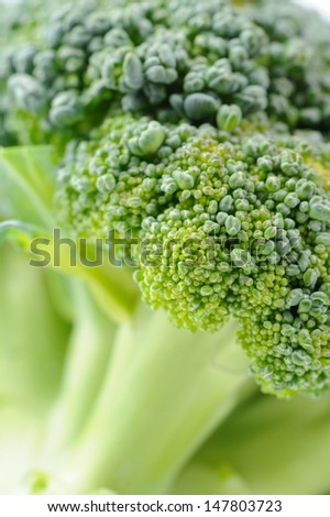 Green Broccoli Close-Up - stock photo
