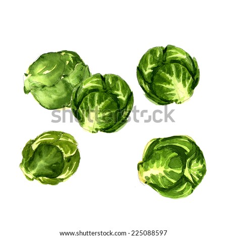 green brussels sprouts cabbage isolated - stock photo
