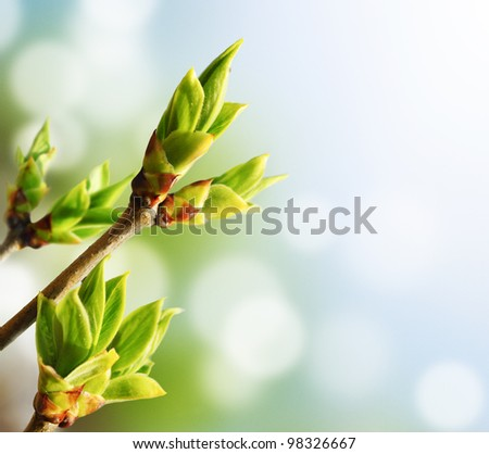 Green bud - stock photo