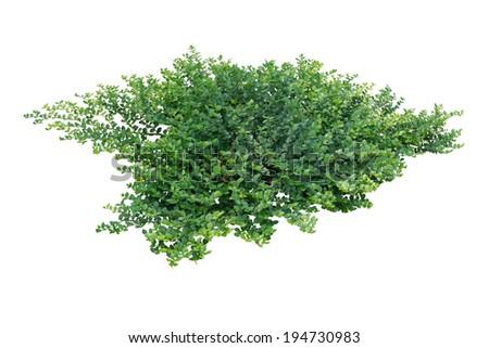 Green bush - stock photo