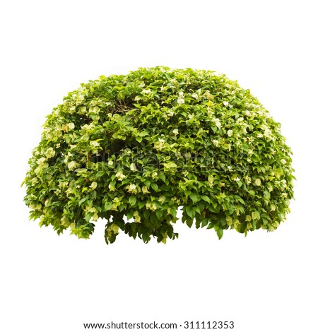 Hedge Isolated Stock Photos, Images, & Pictures | Shutterstock