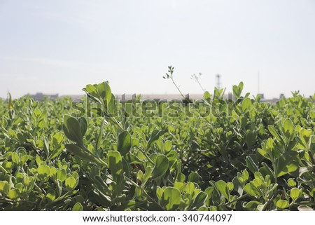 Green bush on brightly sun. - stock photo