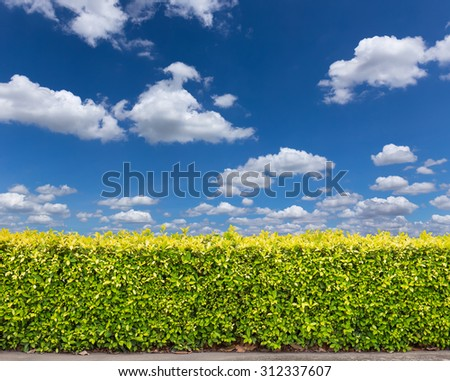 green bush on sky background. - stock photo