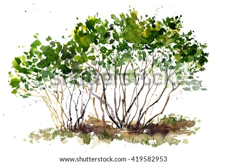 green bushes drawing by watercolor, aquarelle sketch of spring shrubs, painting garden trees, hand drawn art background - stock photo
