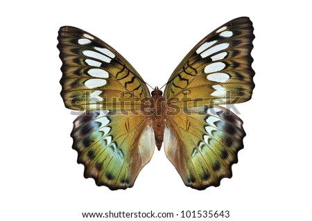 green butterfly (Euthalia byakko) isolated on white background - stock photo