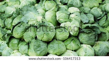 Green Cabbages - stock photo