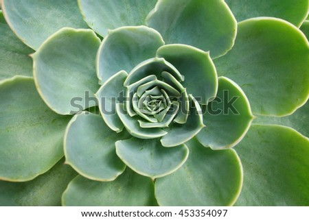 Green cactus flower background (Succulent plan) - stock photo