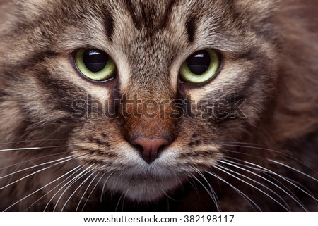 Green cat eyes in close up photo with studio light. Beautiful green cat eyes - stock photo