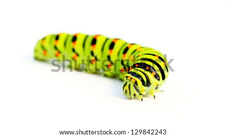 Green caterpillar on white background - stock photo