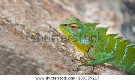 Green chameleon on the sand - stock photo
