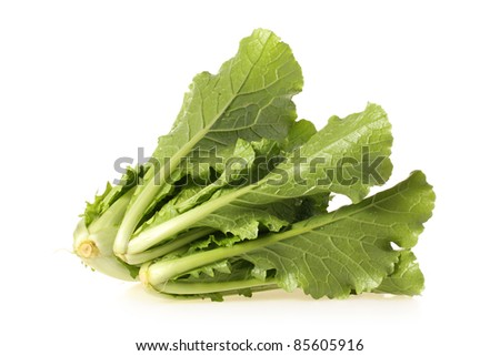 green chinese cabbage on white background - stock photo