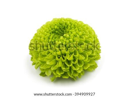 green chrysanthemum on a white background - stock photo