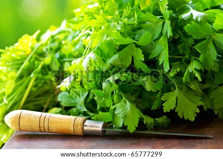 Green Cilantro herbs and knife. - stock photo