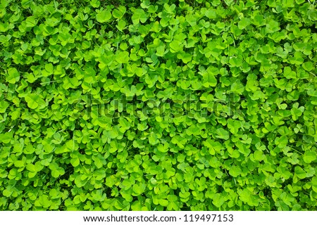 green clover grass field. st Patrick day background - stock photo