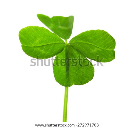 Green clover leaf, isolated on white - stock photo
