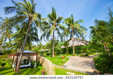 Green coconut trees and green banana trees on the green grass with the blue sky background. - stock photo